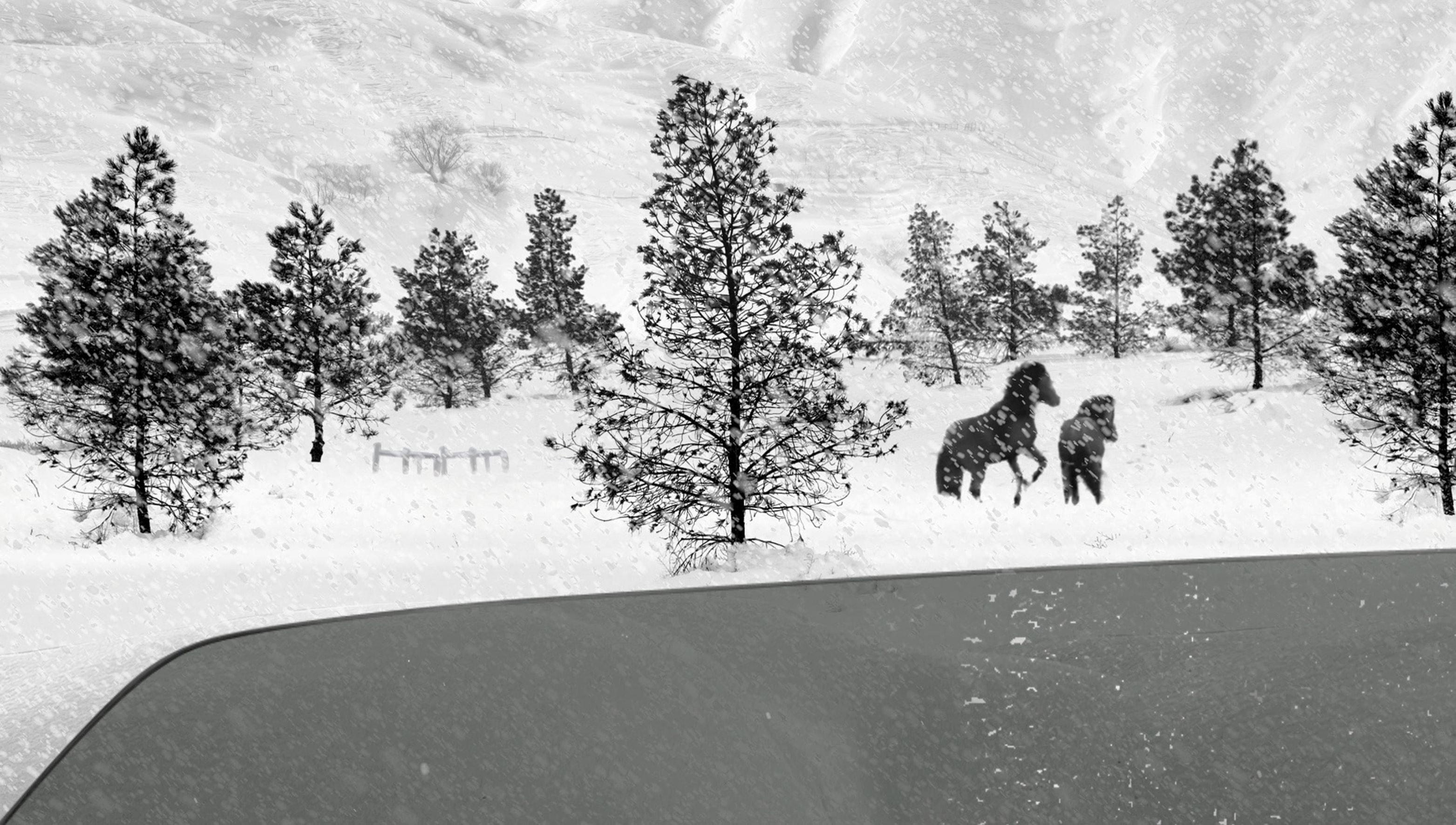 24 Frames (Abbas Kiarostami)